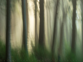 Forest Spirits, Near Lower Brown's Tract Pond, Adirondacks, New York