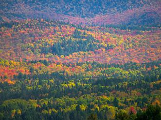 Geometric Fall Foliage, Near Indian Lake, Adirondacks, NY