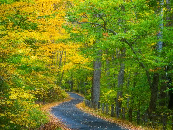 Autumn Path, Pittsfield State Forest, The Berkshires, Massachusetts