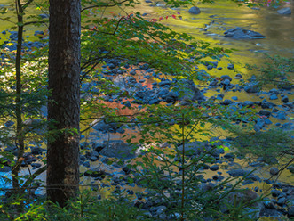 Fall Colors Reflected in the Raquette River, Adirondacks, New York