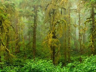 Rain Forest Fog, Ecola State Park, Oregon