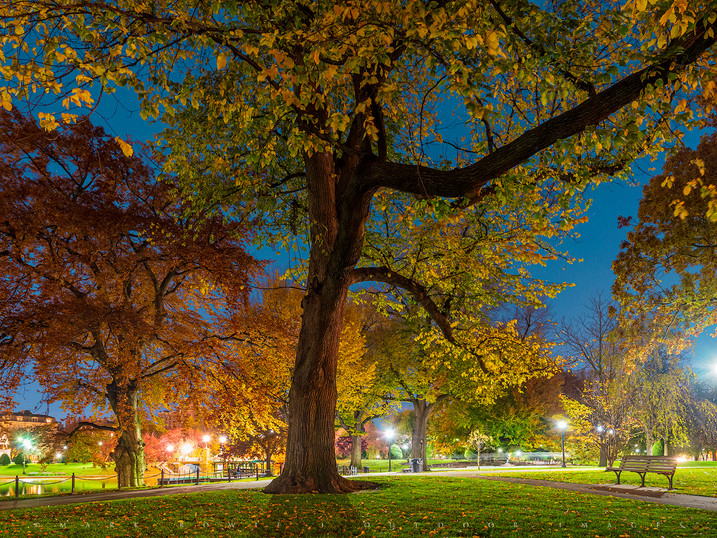 Night Gathering, Boston Public Garden, Massachusetts