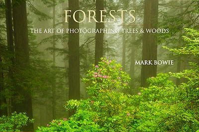 FORESTS_Presen_Title_Page_500pxW.jpg