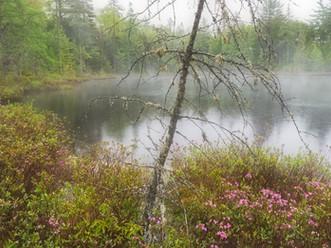Misty Boreal Pond, St. Regis Canoe Wilderness, Adirondacks, New York