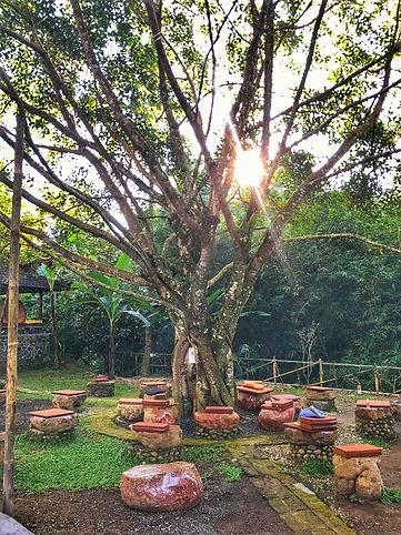 Bali Usada Forest Island Bodhi Tree.jpg