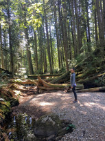 One of my favorite activities - long walks in forests in B.C. Canada