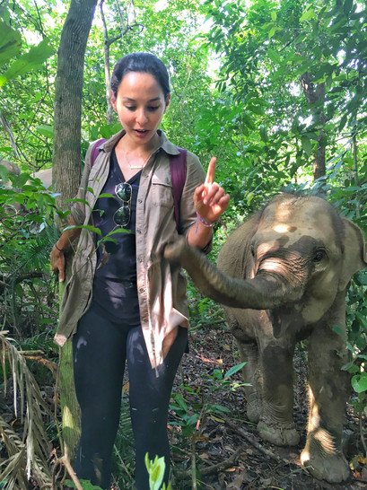 Spending time with animal sanctuaries in Sumatra