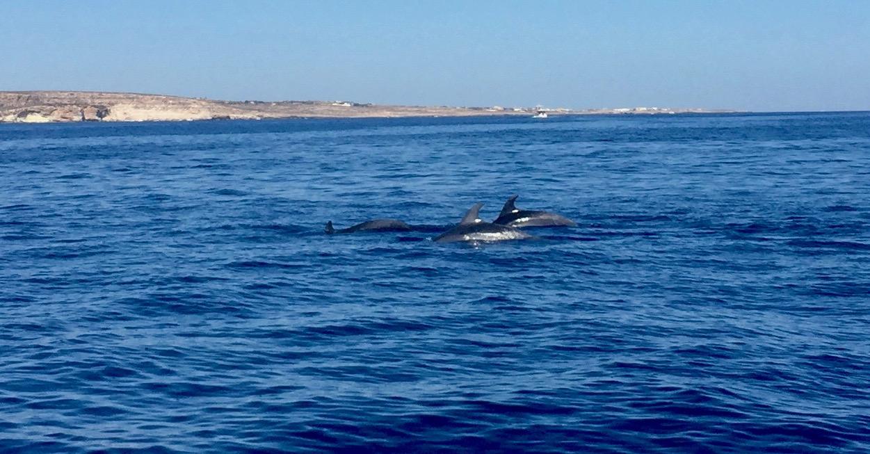 Delfini luglio