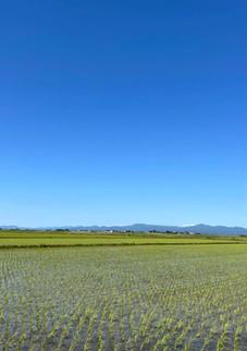 津軽平野(つがる市)