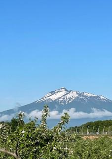 岩木山りんご畑_IMG_6862.jpg