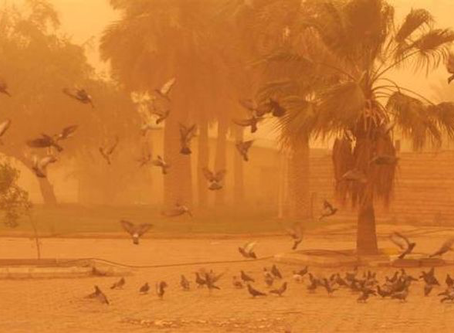 Microorganisms in desert dust: are they dangerous for human health?