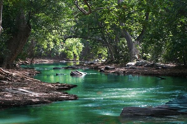 body-of-water-between-green-leaf-trees-7