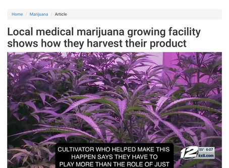Video: Oklahoma Grow Op Seed to Sale Medical Marijuana in 22 Weeks