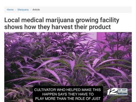 Video: Oklahoma Grow Op Seed to Sale Medical Marijuana in 22 Weeks
