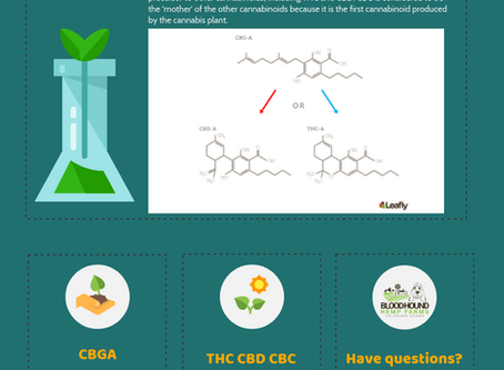 What is CBG? The Mother of All Cannabinoids - Cannabigerol