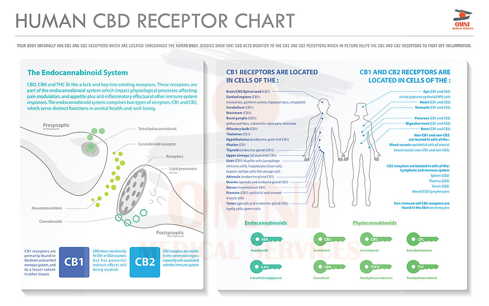 Chart: What is the Human CBD Receptor?