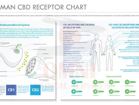 FAQ Chart: Human CBD Receptors