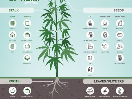 Graphic: CBD vs Hemp - The Crop of 50,000 Uses