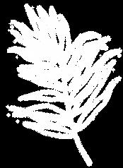 line-leaf-15 copywhite.png
