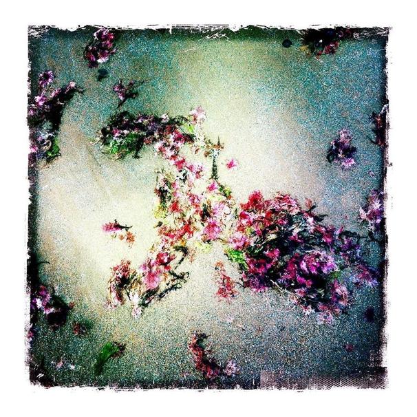 imaginaire-Fleur de mer