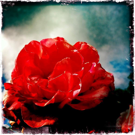 imaginaire- Rose #2
