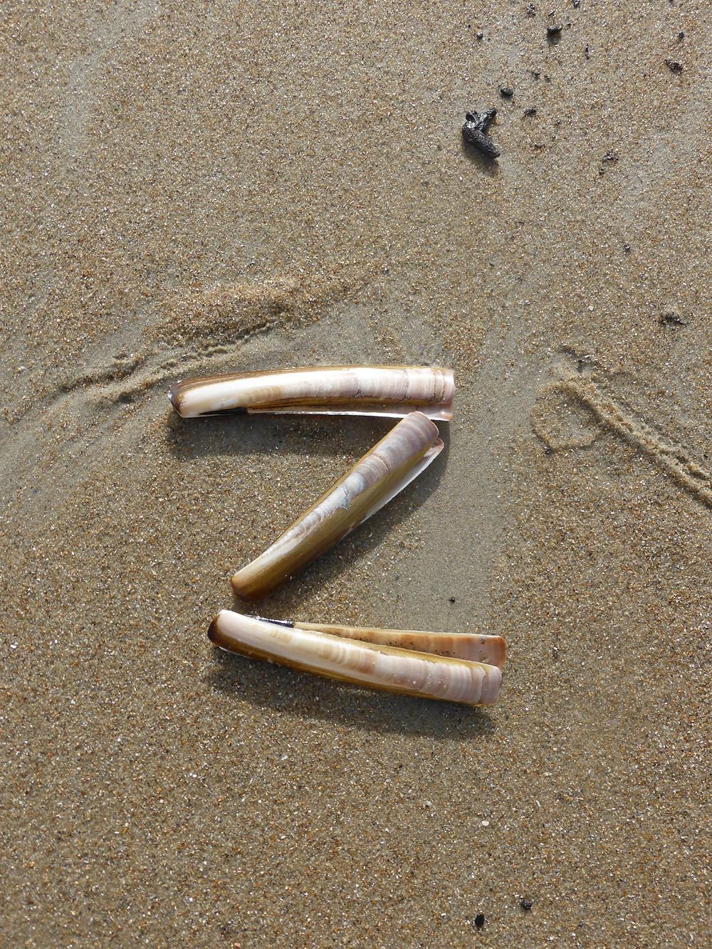 Z from Zoutbeach