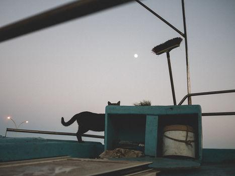 Larnaca, 2016