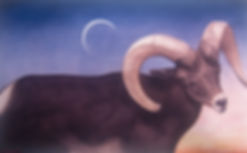 Desrt Bighorn.jpg