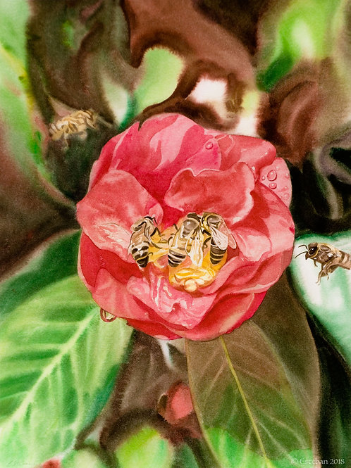 Camellia with Bees~ Gicle'e on Paper 10x14""