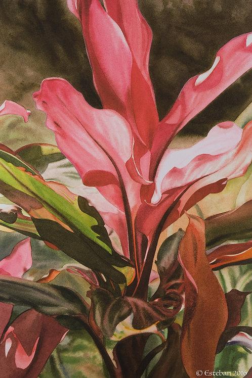 """Red Ti, Kauai ~ Gicle'e on paper 10 x 15"""""""