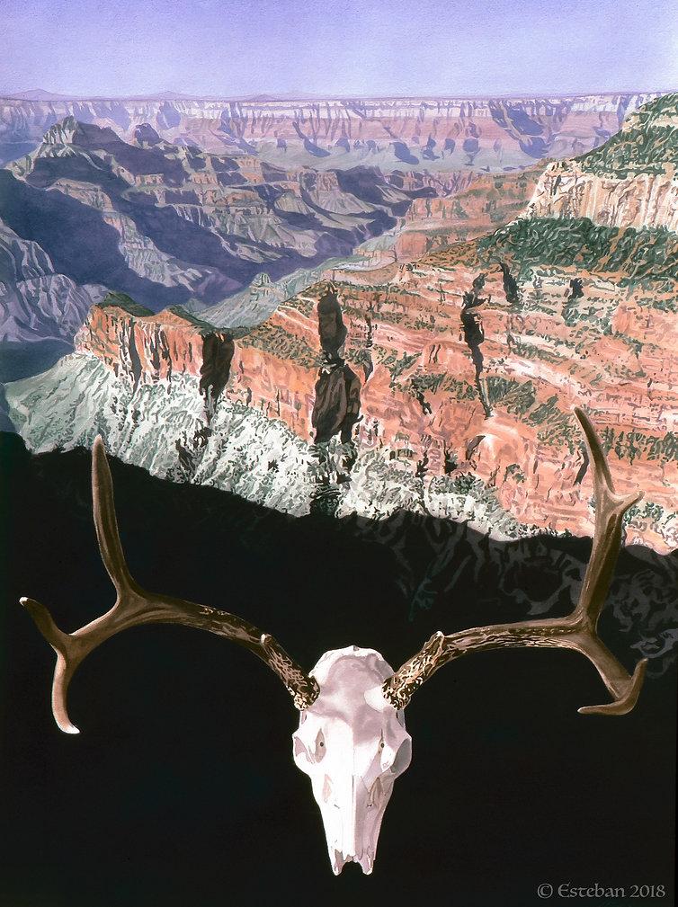 North rim antlers 1.jpg