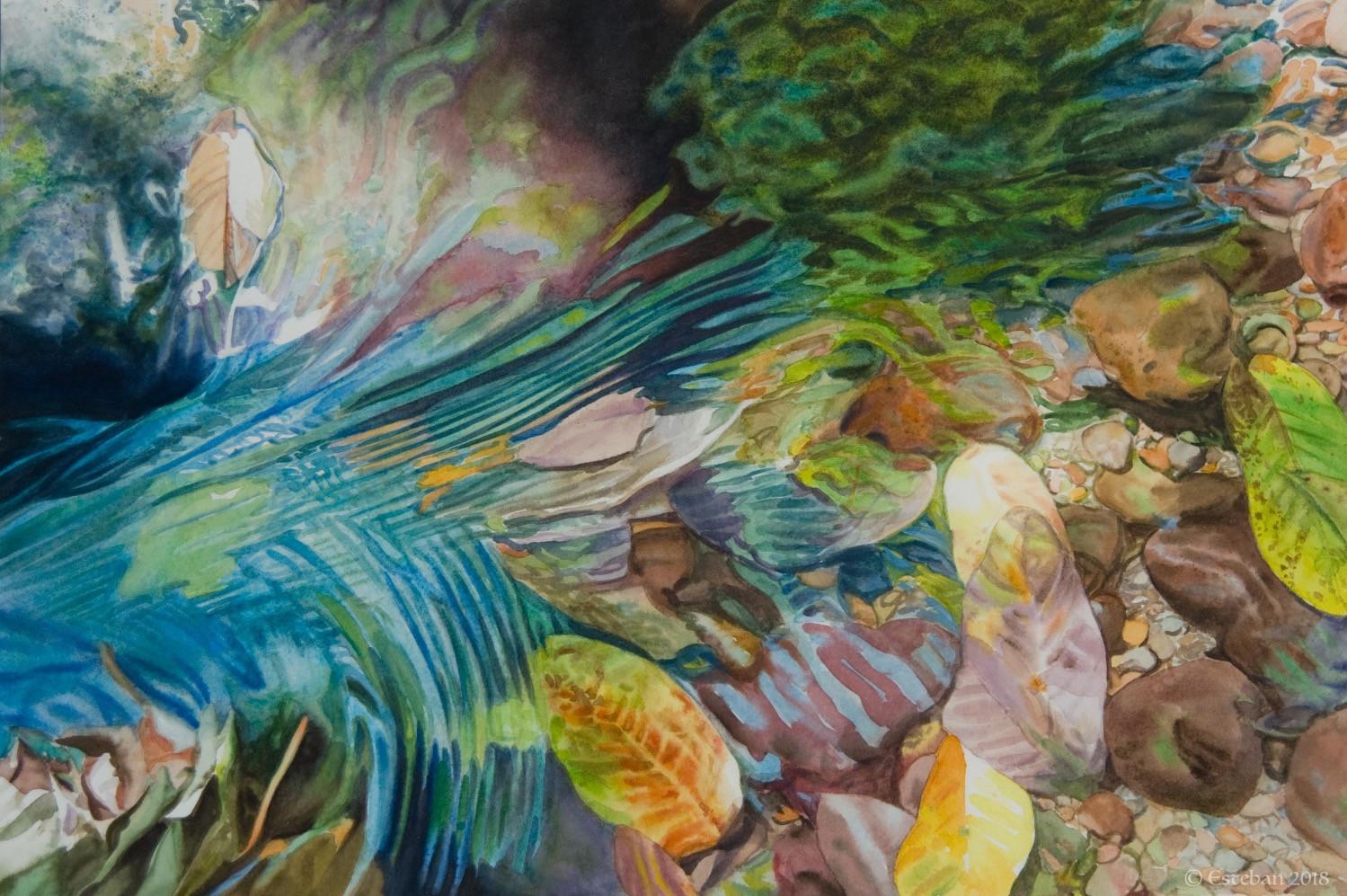 "Water Peacock ~ Watercolor 11x16"" Sold"