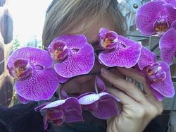 OrchidEyes