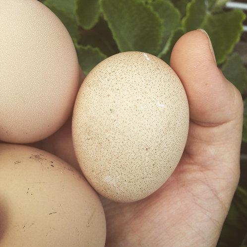 One Dozen Organic Eggs