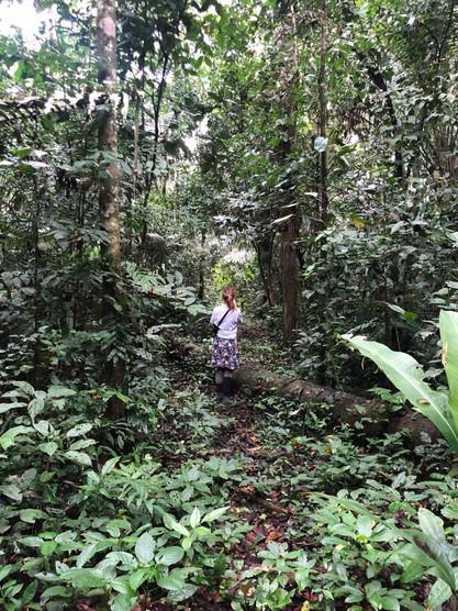 Forest Walk fo aromatics, Peru 2019