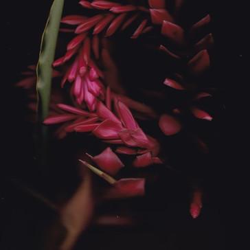 Plant Portraits