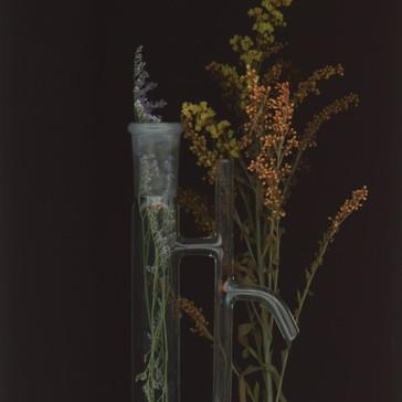 Tracing Plant Alchemy