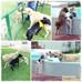 MI PATA PET HOTAL en portada de de BOGA - Ropa y Accesorios para Mascotas