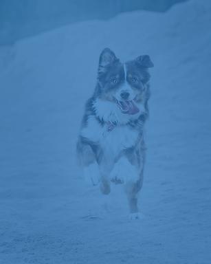 Sheffield Dog Training-02.png