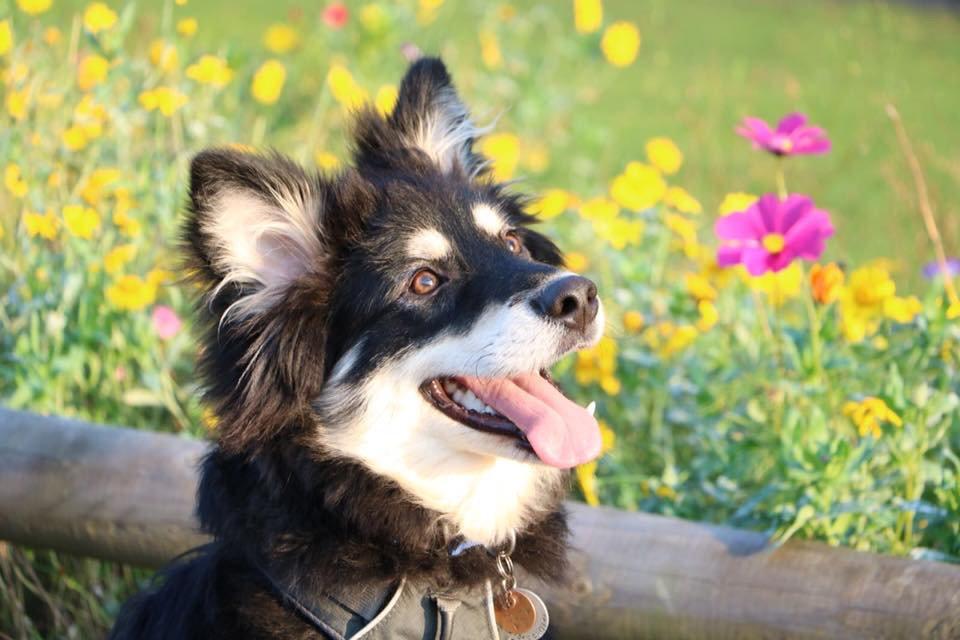 Puppy Lifeskills Course