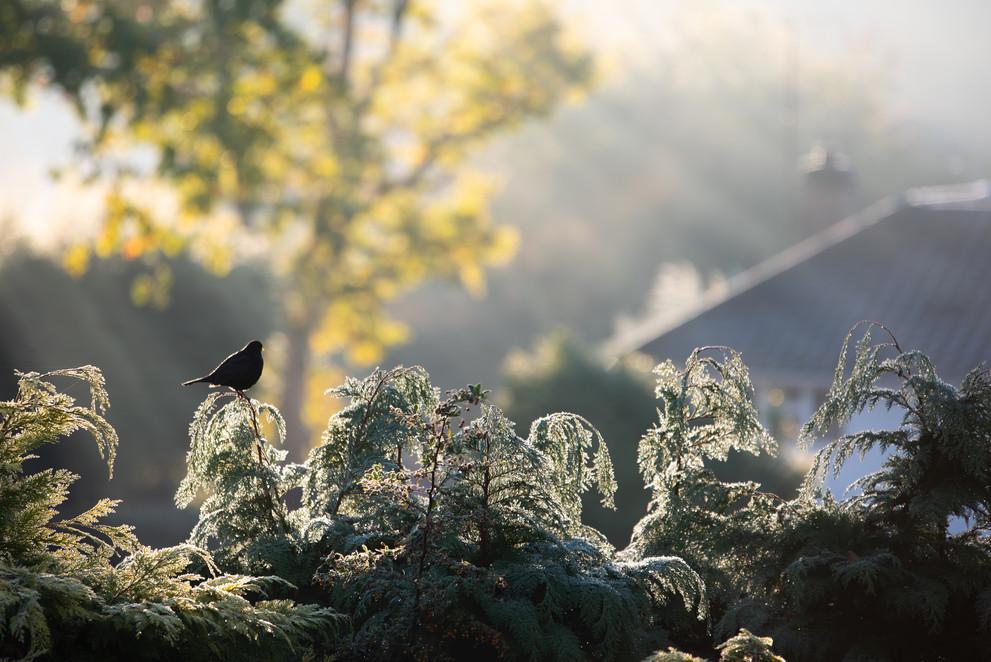 Frosty morning, Surrey
