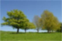 Yorkshire spring_L.jpg