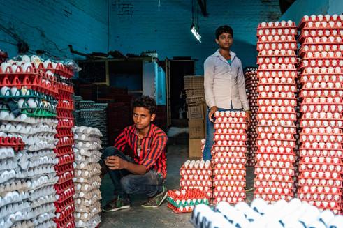 Egg wholesaler, Ahmedabad
