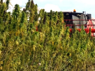 Hemp Manufacturing Comes to Cleveland