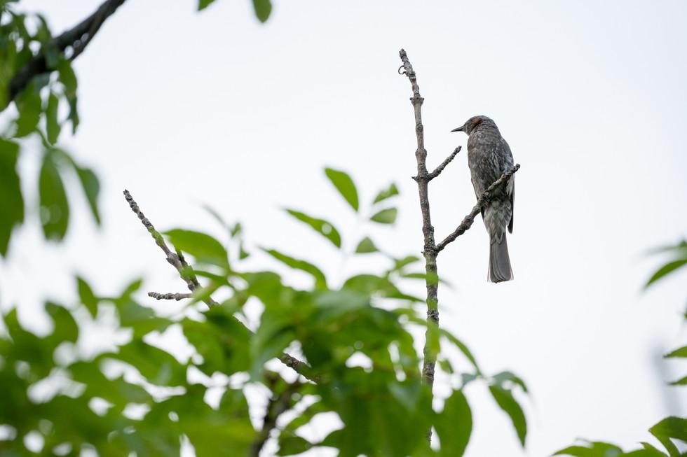 野鳥-7.jpg