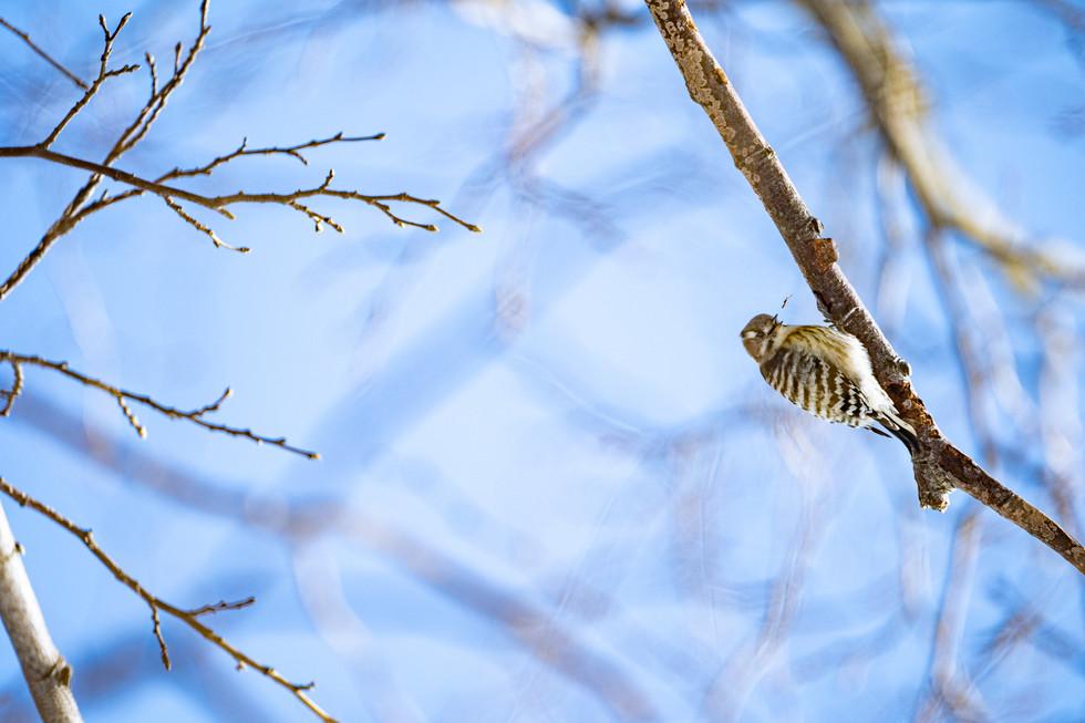 野鳥-18.jpg
