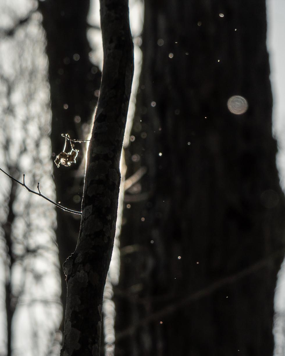 冬-13.jpg