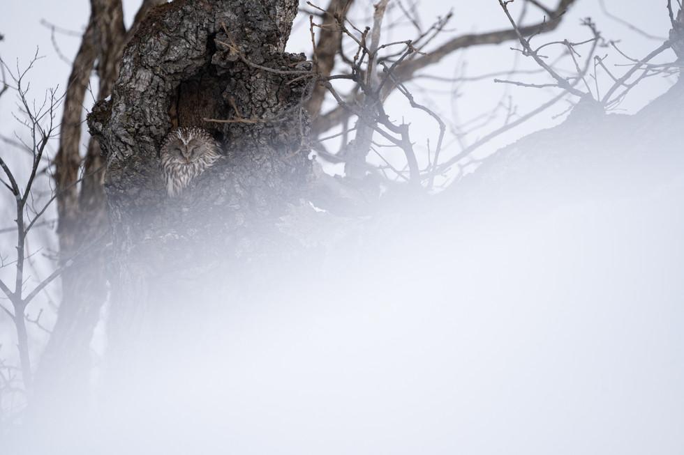 野鳥-24.jpg