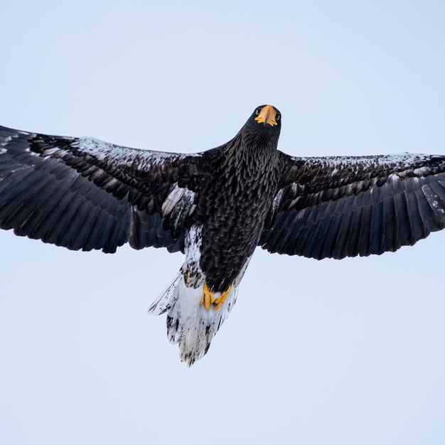 norrthern wild birds
