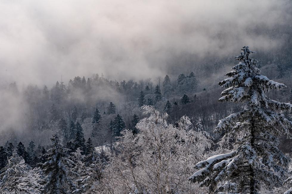 冬-28.jpg